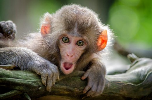 Monkey with scared expression